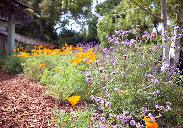 Garden 7 in Brentwood