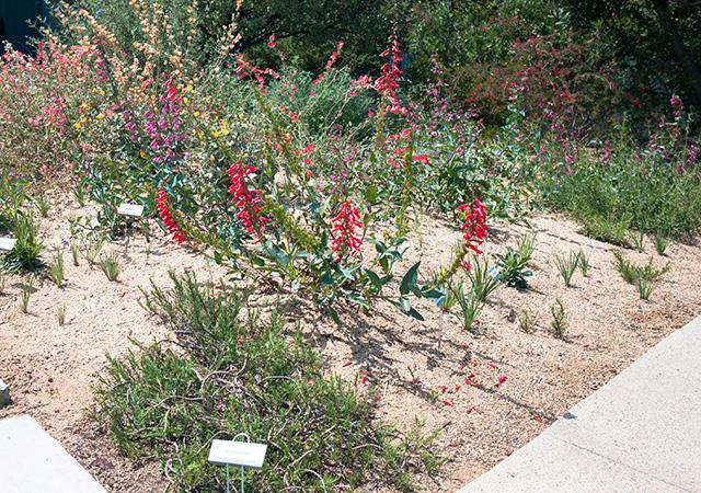 Garden 13 in Del Rey