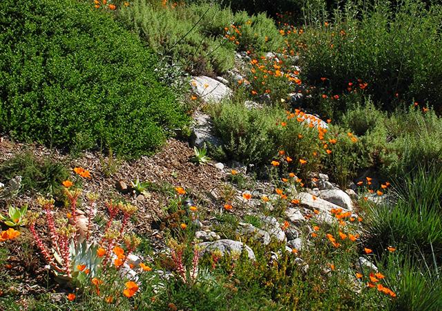 Garden 25 in Altadena