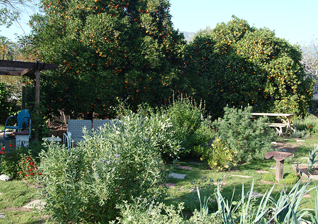 Garden 27 in Pasadena