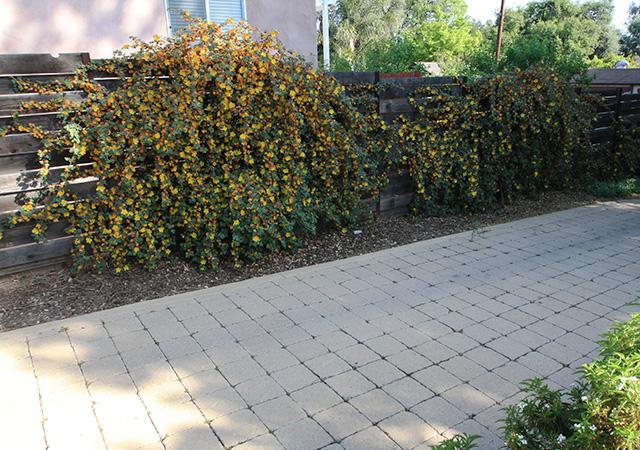 Garden 28 in Altadena