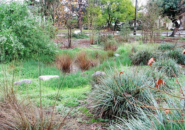 Garden 30 in Pasadena