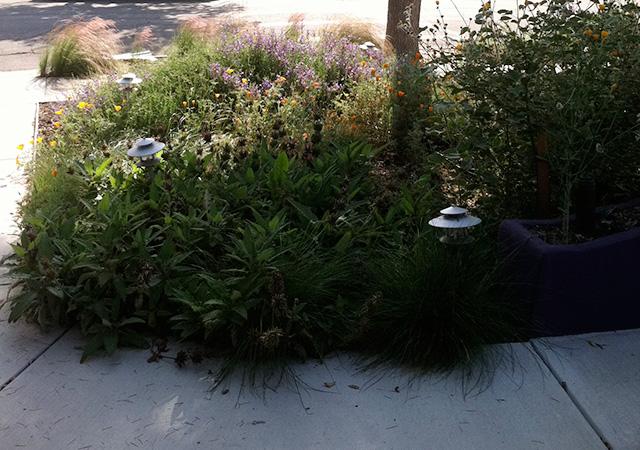 Garden 36 in Burbank