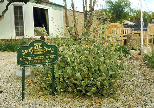 Garden 37 in Burbank