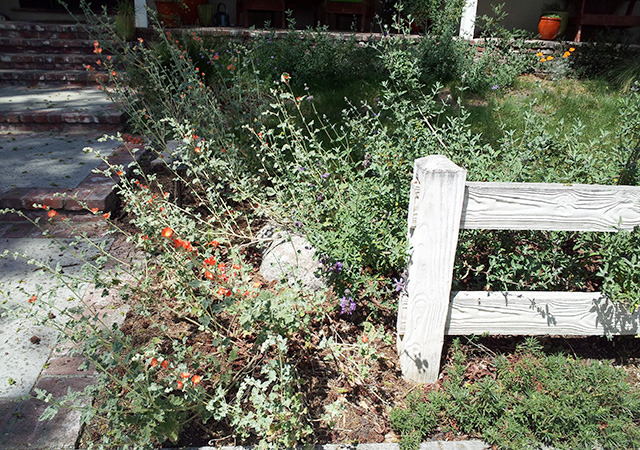 Garden 38 in Burbank