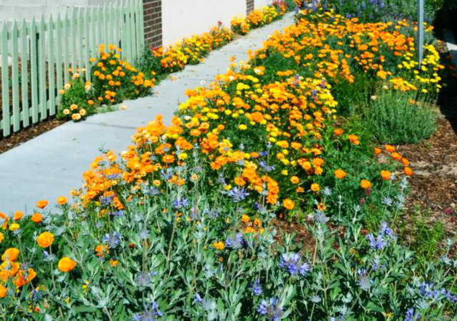 Garden 42 in Northridge