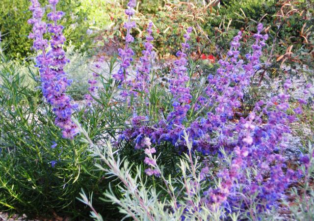Garden 26 in Altadena